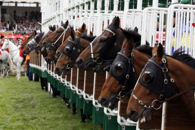 Horses in Starting Gate