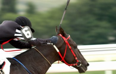Jockey Holding Whip