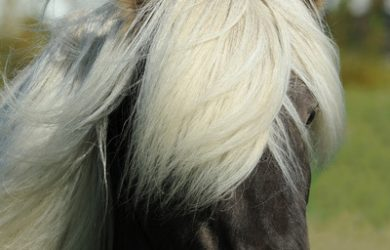 Horse with Light Mane