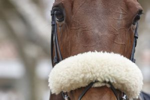 Horse with Sheepskin Noseband