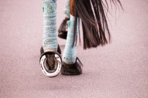 Racehorse with Bandaged Legs