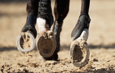 Horse Hooves on Sand Close Up