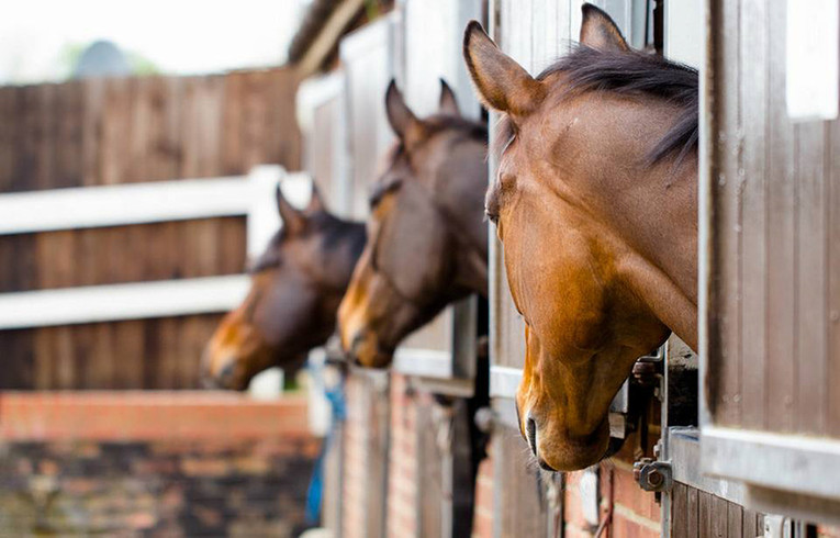 Three Racehorses in Stables