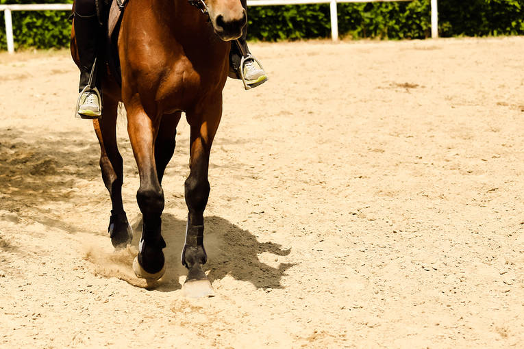 Close Up of Trotting Horse