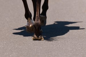 Horses Hooves on Road