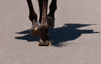Horses Hooves on Road