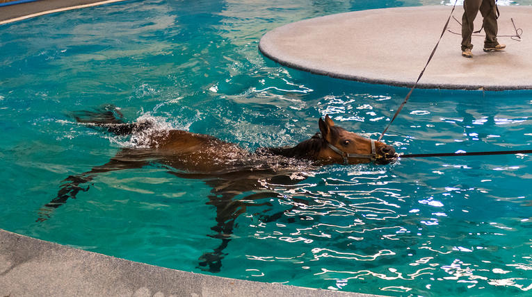 Horse Hydrotherapy