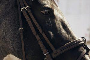 Black Horse Profile