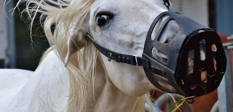 Horse Wearing Muzzle