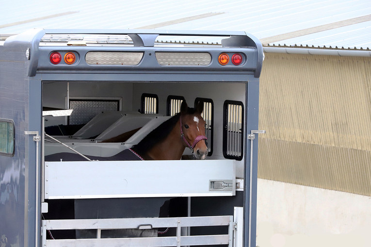 Horse in a Transporter