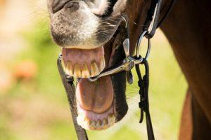 Horse's Teeth