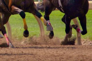 Racehorses on Dirt