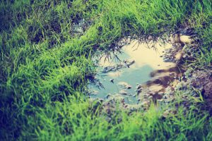 Grass Puddle