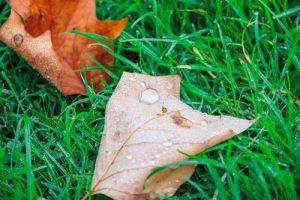 Damp Autumn Grass