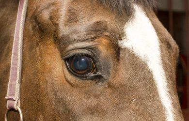 Brown Horse's Eye