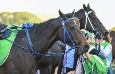 Horses after Racing