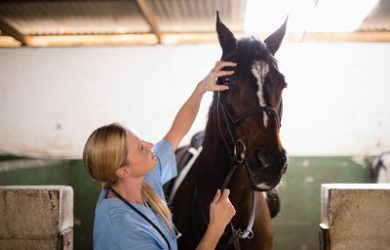 Vet Checking Horse