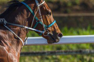 Bay Horse with Headgear