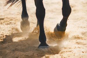 Dark Horse Legs on Sand