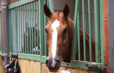 Horse Looking Out of Stable Block
