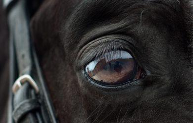 Dark Horse's Eye Close Up