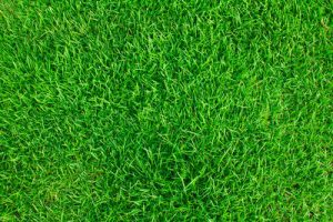 Patch of Grass Close Up