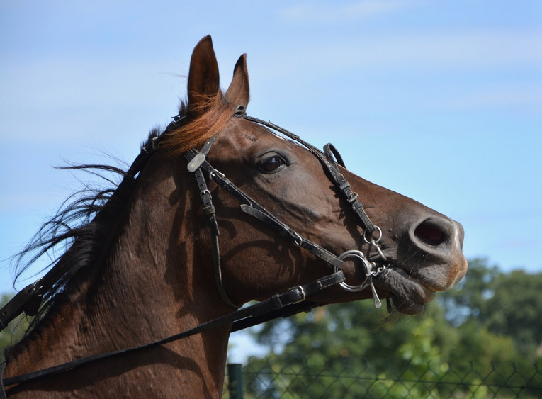 Horse and Reins