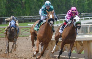 Horses Racing on Dirt Bend