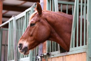 Horse Shut in Stables