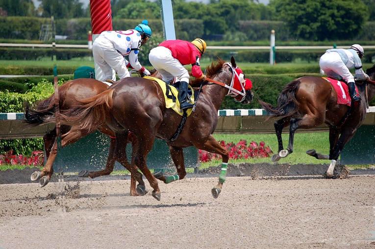 Horses Behind Leader