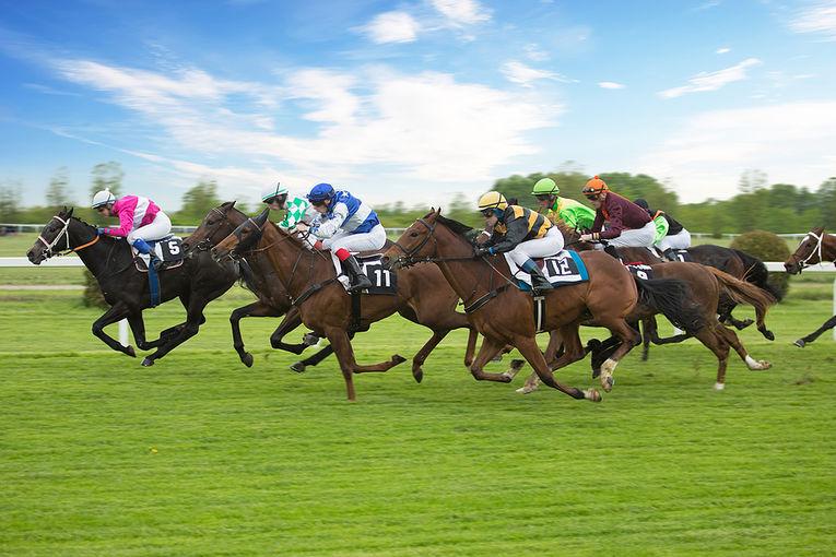 Horse Race on Turf