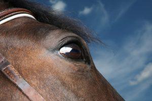 Horse's Eye Against Blue Sky