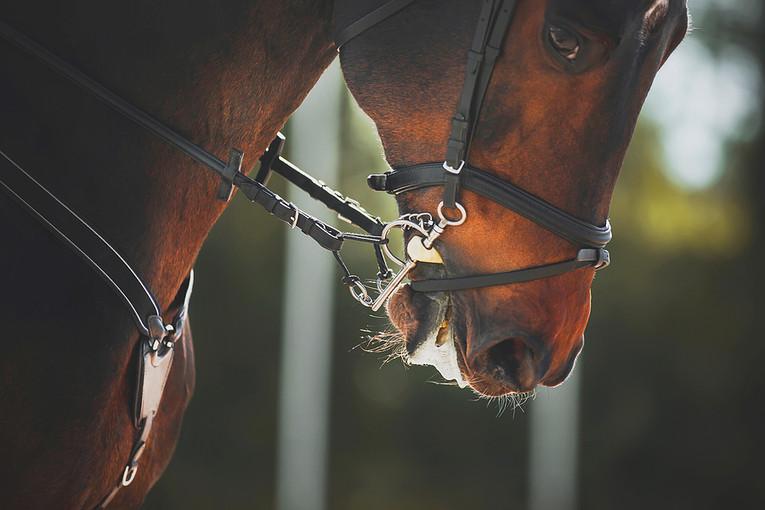 Bay Racehorse's Muzzle