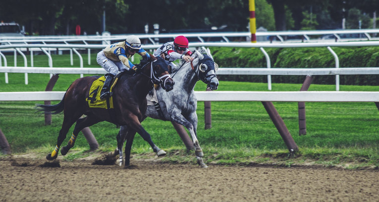 Grey and Bay Horses Racing