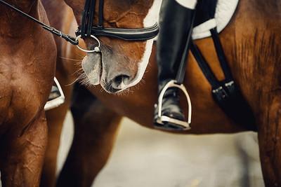 Horses and Leg of Jockey