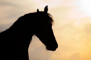 Horse Silhouette Against Sunset Sky