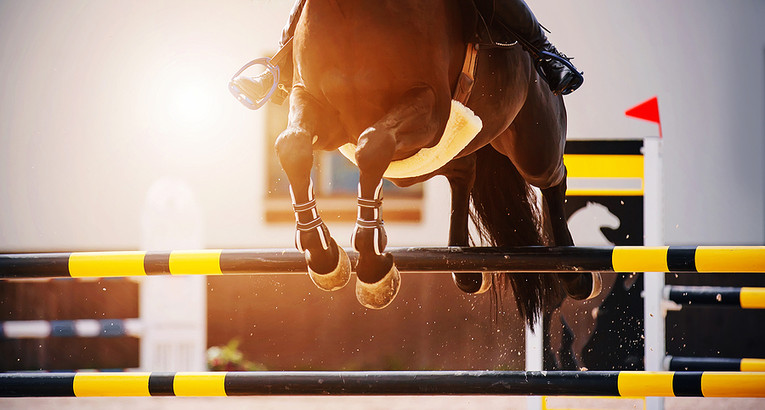 Show Jumping Horse Clearing Fence
